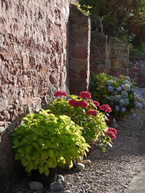 Flowers in a Cromarty vennel